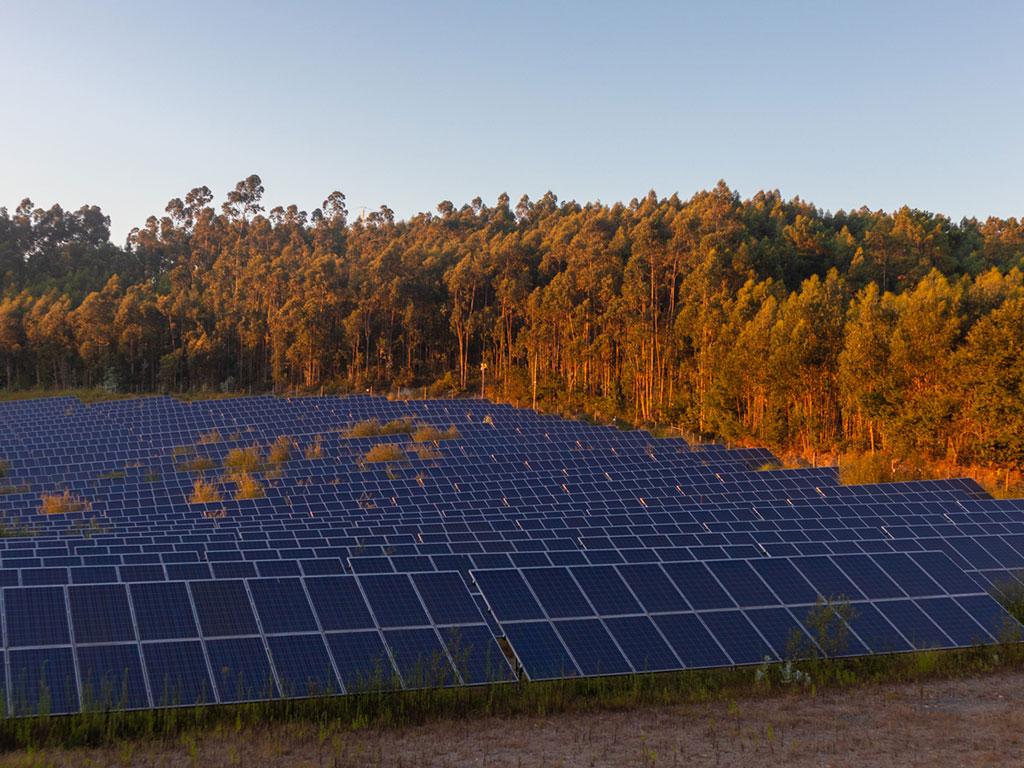 WFM/IGP Green Energy and Sacrifice Zones